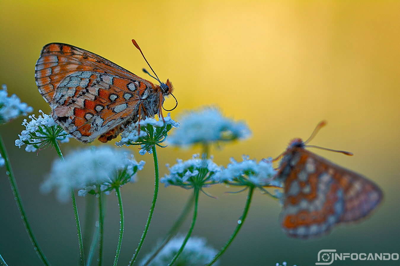 mariposas macro