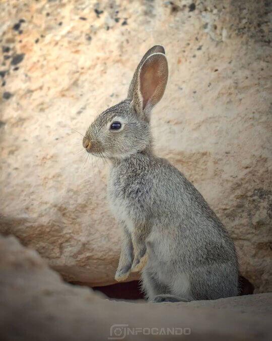 conejo en villacañas toledo